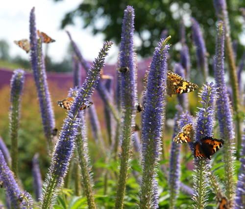 Produktbild Insektenfreude rund ums Jahr