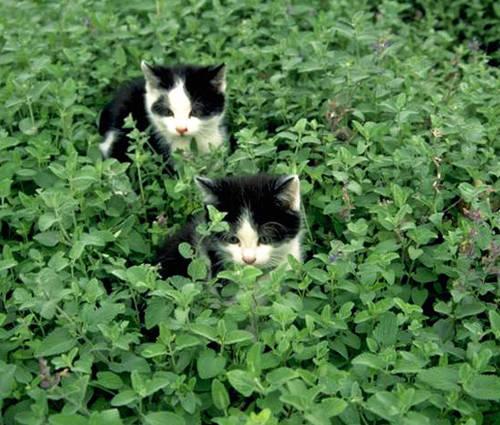 Produktbild Pflanzen für Schmusekatzen und Schnuppernasen