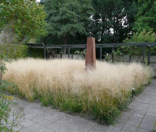 Produktbild Deschampsia cespitosa 'Bronzeschleier' - Wald-Schmiele