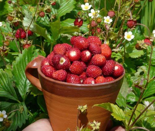 Produktbild BIO-Erdbeeren für Feinschmecker