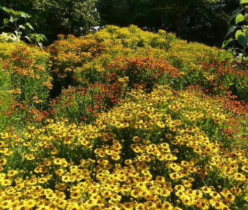 Produktbild Die Glut des Hochsommers - Sonnen-Blumen